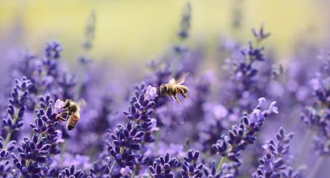 Cold, wet weather stings Prairies' honey production