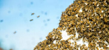 Exploring bee behaviour opens new career possibilities